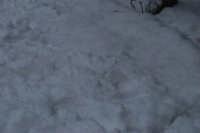 neve sul monte Bonifato - Riserva Naturale Orientata Bosco d'Alcamo - 15 febbraio 2009   - Alcamo (1970 clic)