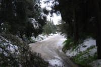 neve sul monte Bonifato - Riserva Naturale Orientata Bosco d'Alcamo - 15 febbraio 2009   - Alcamo (2216 clic)