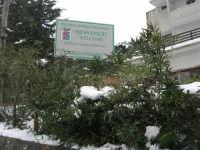 neve sul monte Bonifato - Riserva Naturale Orientata Bosco d'Alcamo - 15 febbraio 2009   - Alcamo (2387 clic)