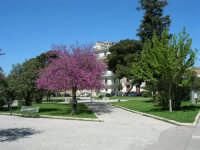 Albero in fiore nella villa di Piazza della Repubblica - 3 aprile 2006  - Alcamo (1226 clic)