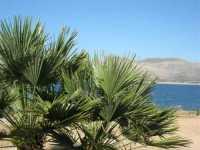 Riserva Naturale Orientata Monte Cofano - 29 luglio 2009  - Custonaci (1652 clic)