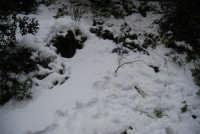 neve sul monte Bonifato - Riserva Naturale Orientata Bosco d'Alcamo - 15 febbraio 2009   - Alcamo (2357 clic)