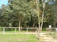 Bosco di Scorace - 18 gennaio 2009   - Buseto palizzolo (2695 clic)
