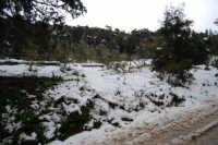 neve sul monte Bonifato - Riserva Naturale Orientata Bosco d'Alcamo - 15 febbraio 2009   - Alcamo (1941 clic)
