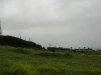 monte Erice: prato, pineta e funivia - 25 aprile 2006   - Erice (1419 clic)