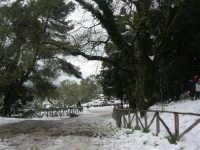 neve sul monte Bonifato - Riserva Naturale Orientata Bosco d'Alcamo - 15 febbraio 2009  - Alcamo (1990 clic)