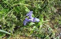 su per la montagna nei pressi della Baia di Guidaloca - flora - 8 dicembre 2009   - Castellammare del golfo (1904 clic)