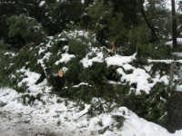 neve sul monte Bonifato - Riserva Naturale Orientata Bosco d'Alcamo - 15 febbraio 2009   - Alcamo (2450 clic)