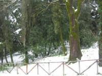 neve sul monte Bonifato - Riserva Naturale Orientata Bosco d'Alcamo - 15 febbraio 2009  - Alcamo (2508 clic)