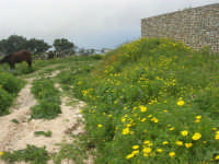al Belvedere San Nicola - 1 maggio 2009   - Erice (2079 clic)