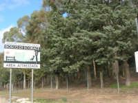 Bosco di Scorace - 18 gennaio 2009   - Buseto palizzolo (1892 clic)