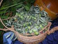anteprima del XII Cous Cous Fest - 20 settembre 2009   - San vito lo capo (1901 clic)