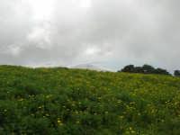 al Belvedere San Nicola - panorama . . . con foschia - 1 maggio 2009   - Erice (2224 clic)