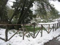 neve sul monte Bonifato - Riserva Naturale Orientata Bosco d'Alcamo - 15 febbraio 2009  - Alcamo (2332 clic)