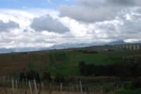 Contrada Sasi - panorama est - monti innevati - 13 febbraio 2009  - Alcamo (1863 clic)