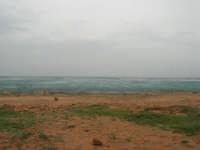 Macari - Golfo del Cofano - il forte vento di scirocco spazza il mare e solleva mulinelli d'acqua che partono dalla riva e si allontanano velocemente verso il largo - 29 marzo 2009  - San vito lo capo (1527 clic)