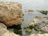 mare e scogli - 25 aprile 2006   - Valderice (3916 clic)