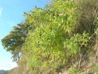 vegetazione lungo la strada che sale a Caltabellotta - 9 novembre 2008  - Caltabellotta (1747 clic)
