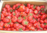 pomodori per salsa, appena raccolti - 2 ottobre 2007  - Alcamo (3864 clic)