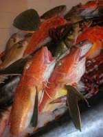 Pescheria Randazzo in via Guglielmo Marconi: il banco del pesce - 18 agosto 2007    - Castellammare del golfo (1678 clic)