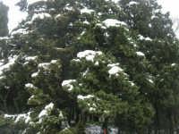 neve sul monte Bonifato - Riserva Naturale Orientata Bosco d'Alcamo - 15 febbraio 2009               - Alcamo (2135 clic)