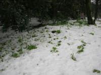 neve sul monte Bonifato - Riserva Naturale Orientata Bosco d'Alcamo - 15 febbraio 2009  - Alcamo (1872 clic)