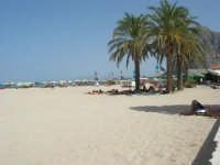 la spiaggia - all'ombra delle palme - 23 agosto 2008  - San vito lo capo (690 clic)