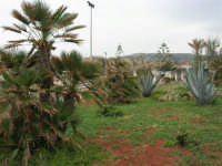 aiuola con palme nane ed agavi - 25 aprile 2006   - Valderice (16948 clic)