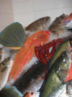 Pescheria Randazzo in via Guglielmo Marconi: il banco del pesce - 18 agosto 2007    - Castellammare del golfo (1549 clic)