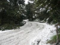 neve sul monte Bonifato - Riserva Naturale Orientata Bosco d'Alcamo - 15 febbraio 2009  - Alcamo (2360 clic)