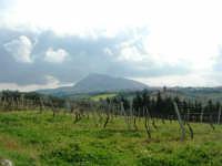 campagna alcamese e monte Bonifato - 23 febbraio 2009   - Alcamo (1864 clic)
