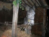 Presepe Vivente - 26 dicembre 2008  - Balata di baida (2452 clic)