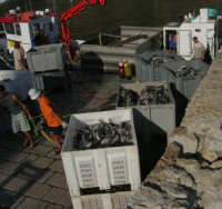 al porto - 18 agosto 2007    - Castellammare del golfo (605 clic)