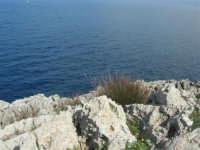 Capo San Vito - la costa rocciosa e l'azzurro del mare - 10 maggio 2009   - San vito lo capo (1371 clic)