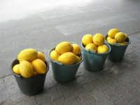 meloni gialli - 18 settembre 2007  - Alcamo (2351 clic)