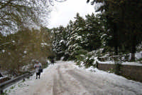 neve sul monte Bonifato - Riserva Naturale Orientata Bosco d'Alcamo - 15 febbraio 2009   - Alcamo (2004 clic)