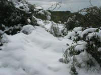 neve sul monte Bonifato - Riserva Naturale Orientata Bosco d'Alcamo - 15 febbraio 2009               - Alcamo (1736 clic)