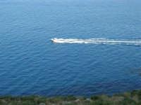 panorama: l'azzurro del mare - 30 agosto 2008   - Riserva dello zingaro (893 clic)