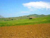 la campagna a primavera - 3 maggio 2009   - Buseto palizzolo (1610 clic)