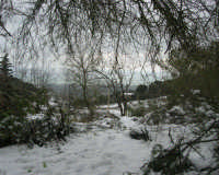 neve sul monte Bonifato - Riserva Naturale Orientata Bosco d'Alcamo - 15 febbraio 2009  - Alcamo (1745 clic)