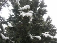 neve sul monte Bonifato - Riserva Naturale Orientata Bosco d'Alcamo - 15 febbraio 2009               - Alcamo (1812 clic)