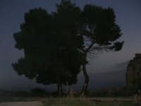 ruderi del paese distrutto dal terremoto del gennaio 1968: alberi in periferia - 2 ottobre 2007  - Poggioreale (3138 clic)
