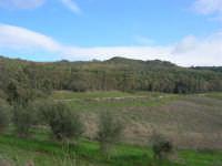 Bosco di Scorace - 18 gennaio 2009   - Buseto palizzolo (1916 clic)