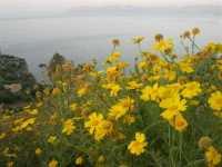 Faraglioni e Golfo di Castellammare - 22 maggio 2009  - Scopello (1614 clic)