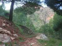 nella pineta del Monte Inici - 11 ottobre 2009  - Castellammare del golfo (1877 clic)