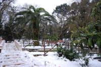 neve sul monte Bonifato - Riserva Naturale Orientata Bosco d'Alcamo - giardino - 15 febbraio 2009   - Alcamo (3622 clic)