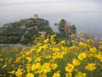 Torre di avvistamento, faraglioni e tonnara - 22 maggio 2009  - Scopello (1700 clic)