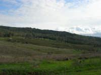 Bosco di Scorace - 18 gennaio 2009   - Buseto palizzolo (1781 clic)