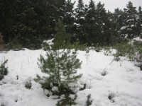 neve sul monte Bonifato - Riserva Naturale Orientata Bosco d'Alcamo - 15 febbraio 2009  - Alcamo (1626 clic)