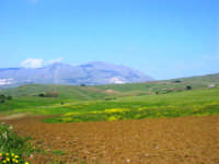 la campagna a primavera - 3 maggio 2009   - Buseto palizzolo (1529 clic)